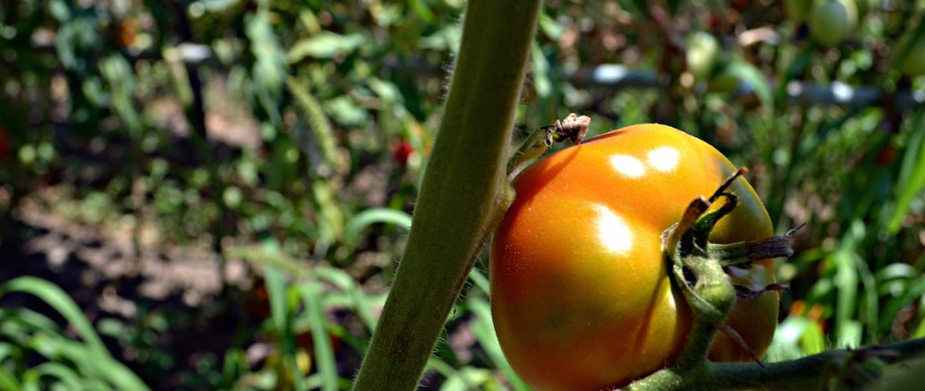 Indipendent Food: Ubiquitous Commons and rural innovation, again